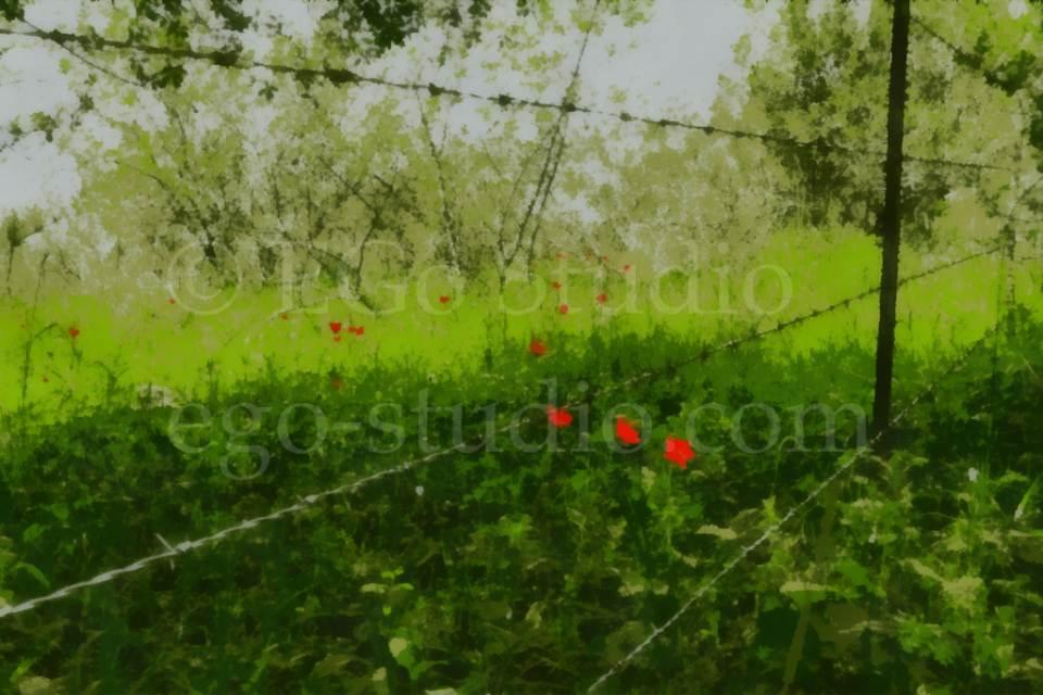 flowers_migophotos_20120430_-3.jpg