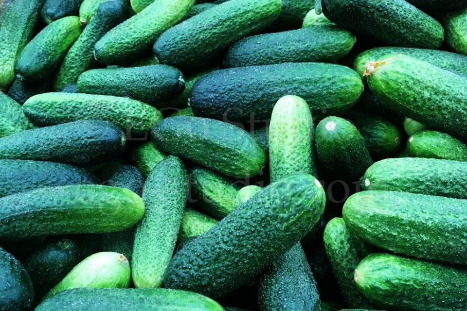 cucumber_background.jpg