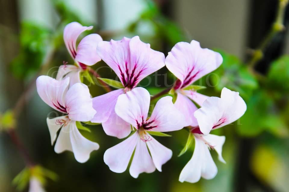 flowers_migophotos_20110513_3651.jpg