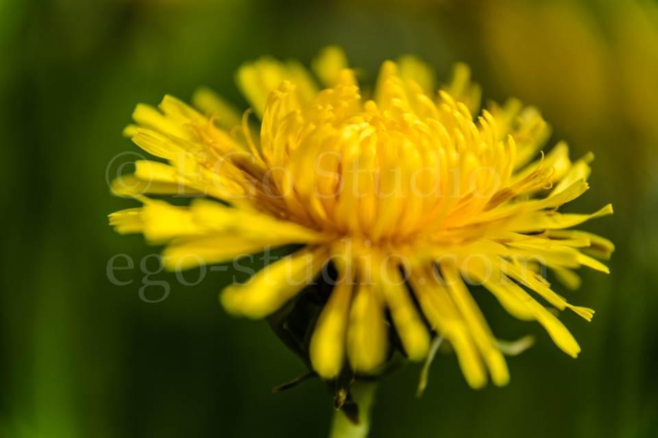 flowers_migophotos_20120520_6101.jpg