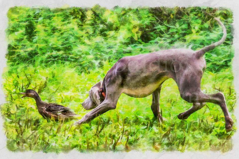hunt_20160911_0146.jpg